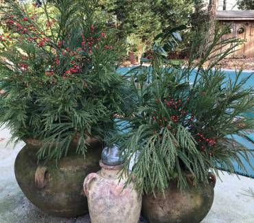 Planting with Christmas in Mind