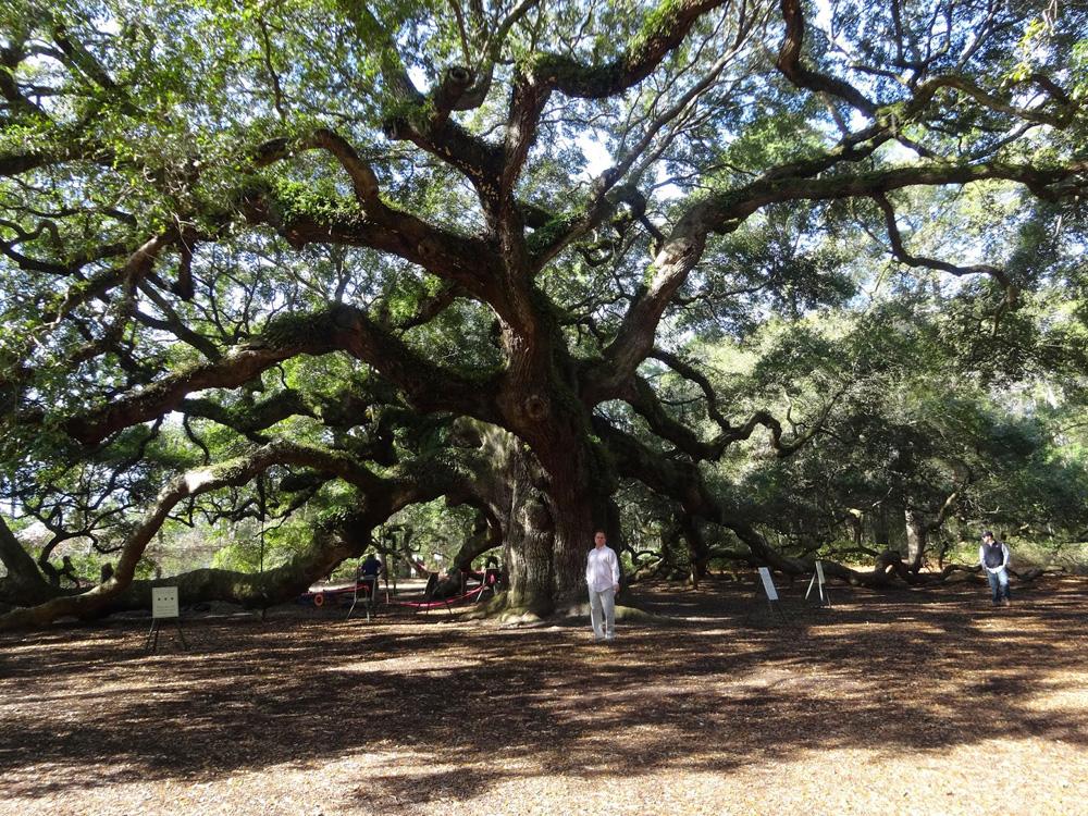 The Angel Oak Tree