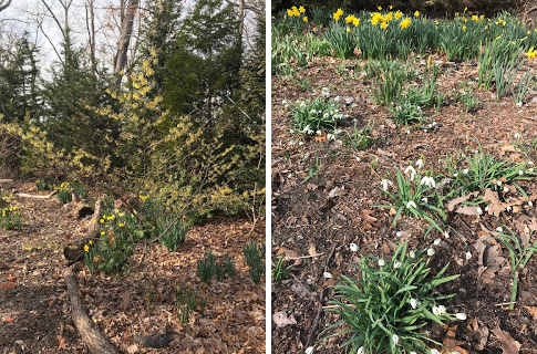 Planting to Transition from Winter to Spring